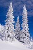 Paisagem nevado fotos de stock