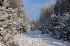 Paisagem nevado bonita do inverno imagens de stock royalty free