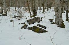 Paisagem nevado das pedras do trajeto ao salto do rio um de Nervion das cachoeiras as mais altas em Europa Neve dos rios da natur imagens de stock royalty free