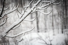 Paisagem nevado do inverno Imagem de Stock