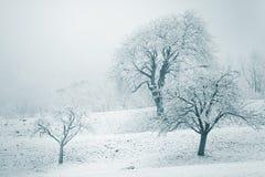 Paisagem nevado do inverno com árvores neve-folheadas Fotos de Stock Royalty Free