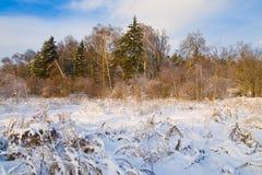 Paisagem nevado do inverno no por do sol Foto de Stock Royalty Free