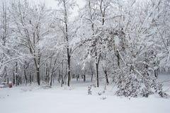 Paisagem nevando Fotografia de Stock