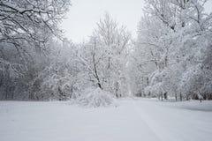 Paisagem nevando Fotos de Stock