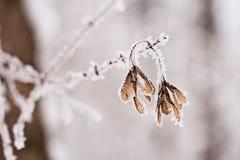 Paisagem nevando Detalhes nos ramos fotografia de stock