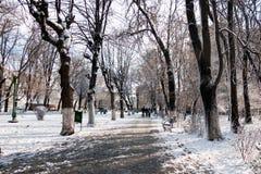 Paisagem nevando no parque Foto de Stock