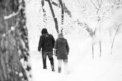 Paisagem nevando no parque Imagem de Stock Royalty Free