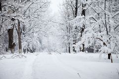 Paisagem nevando no parque Fotografia de Stock Royalty Free