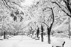 Paisagem nevando no parque Imagens de Stock