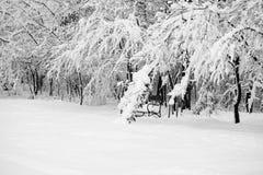 Paisagem nevando no parque Fotos de Stock Royalty Free