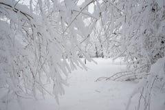 Paisagem nevando no parque Detalhes nos ramos Foto de Stock