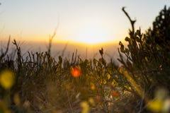 paisagem nevoenta Fotos de Stock Royalty Free