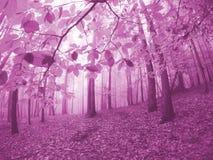 Paisagem nevoenta colorida violeta da floresta das faias imagens de stock royalty free