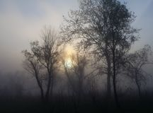 Paisagem nevoenta com uma silhueta da árvore Imagens de Stock Royalty Free