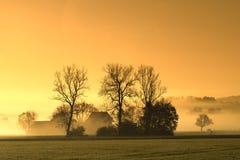 Paisagem nevoenta da árvore do por do sol Fotos de Stock Royalty Free