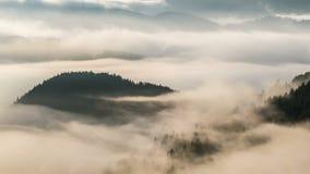 Paisagem nevoenta da floresta nas cores do lapso de tempo da manhã filme