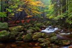 Paisagem nevoenta do outono ou do ver?o Manh? nevoenta enevoada com rio em um vale do parque bo?mio de Su??a Detalhe de floresta fotos de stock
