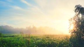 Paisagem nevoenta do verão com o gramado e o sol da floresta que brilham através dos ramos de árvore imagens de stock royalty free