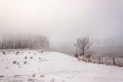 Paisagem nevoenta misteriosa do inverno em um dia muito frio Imagens de Stock