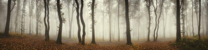 Paisagem nevoenta misteriosa do panorama da floresta Fotografia de Stock