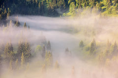 Paisagem nevoenta nas montanhas Imagens de Stock