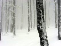 Paisagem nevoenta nevado Imagens de Stock
