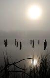 Paisagem nevoenta vertical do lago foto de stock