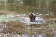 Paisagem no Dutch Limburgo com animal de estimação Fotografia de Stock