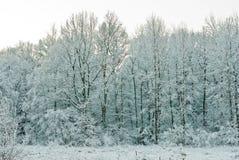 Paisagem no inverno Imagens de Stock