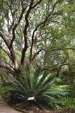 Paisagem no jardim botânico em Cape Town em África do Sul Foto de Stock