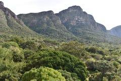 Paisagem no jardim botânico em Cape Town em África do Sul Fotos de Stock