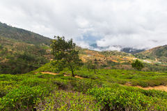 Paisagem no país do monte de Sri Lanka Imagem de Stock