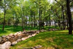 A paisagem no parque foto de stock