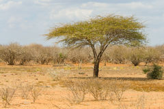 Paisagem no parque nacional de Kruger, África do Sul Foto de Stock