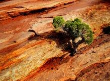 Paisagem no parque nacional dos arcos Imagem de Stock Royalty Free
