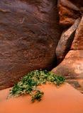 Paisagem no parque nacional dos arcos Imagens de Stock Royalty Free