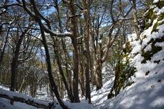 Paisagem no Patagonia o Chile Imagem de Stock