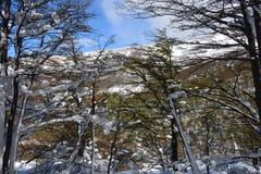 Paisagem no Patagonia o Chile Imagens de Stock