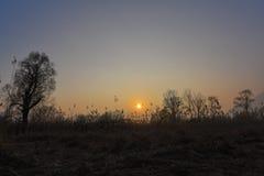 Paisagem no por do sol no pântano Foto de Stock Royalty Free