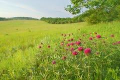 Paisagem no prado verde com flores roxas Imagens de Stock Royalty Free