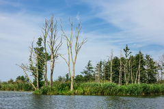 Paisagem no rio Peene perto de Loitz Fotos de Stock