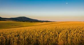 Paisagem no sol com campos e árvores imagem de stock royalty free