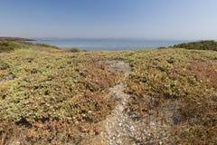 Paisagem no verão na ilha de Tabarca Fotografia de Stock