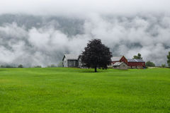 Paisagem norueguesa com exploração agrícola e árvore em um dia nebuloso Foto de Stock Royalty Free