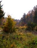 Paisagem outonal da floresta Natureza polonesa imagens de stock