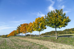 Paisagem panorâmico com aleia, campos e floresta Fotografia de Stock Royalty Free