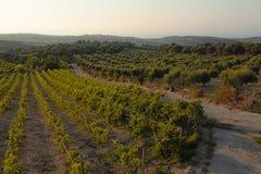 Paisagem panorâmico de um vinhedo na Creta, Grécia Fotos de Stock