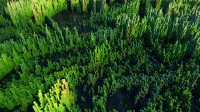 Paisagem pantanosa feita fora dos cubos coloridos Fotos de Stock Royalty Free