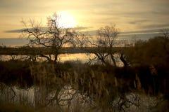 Paisagem pantanoso no Saintes-Maries-de-la-Mer, Camargue, França fotos de stock royalty free