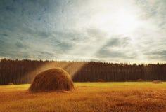 Paisagem perfeita da colheita com os pacotes da palha entre campos Foto de Stock